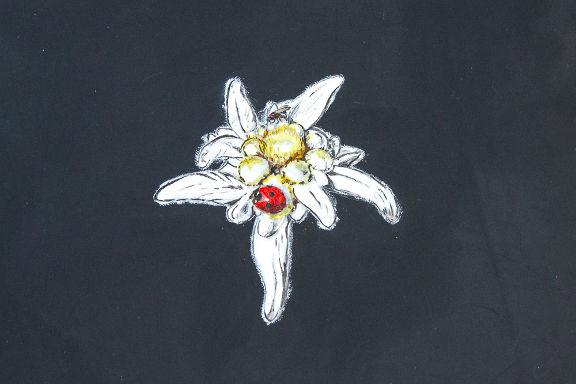 Blumen Malvorlage (Edelweiss) für eine persönliches Logo auf dem Laptop